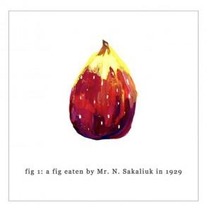 Kobayashi fig